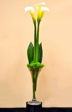 Calla Lilies, Green Tricks, Hosta Leaf