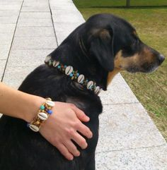 Hutch and Simi matching each other! Cocos good old friends with Coco Beads Beach dog collar and bracelet in Austria! Old Best Friends, Beaded Dog Collar, Dog Beach, Austria, Bracelet, Beads, Happy, Dogs, Beading