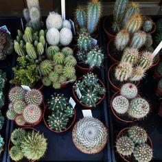 www.pinterest.com/katuuuuh