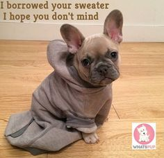 Buy Latest Dog clothing and don't let your dog feel down. so Visit Now