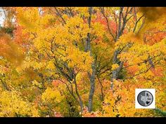DANS LA NATURE Ep.31b : La nature en automne Nature Sauvage, Wild Nature, Wilderness, Canada, Painting, Fall, Painting Art, Paintings, Drawings