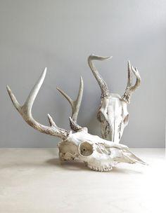 natural history / deer antlers & skull from ohalbatross.