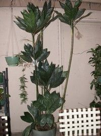 Indoor palms: Selecting and caring for these popular houseplants Landscape Design, Garden Design, Palm Trees Landscaping, Indoor Palms, Houseplants, Metallica, Plant Leaves, Tropical, Design Inspiration