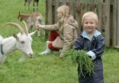 Feeding the goats! Rent petting zoo animals for a birthday party in the Orange County CA area!  Petting zoo animal rental - Irvine, Riverside, LA, Orange County, Santa Ana, and surrounding areas! Newport Beach, Anaheim - children's zoo