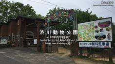 渋川動物公園 2017年春に生まれた動物の赤ちゃん (Babies born in spring of 2017 (Shibukawa zoo))
