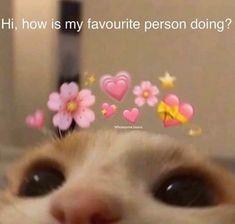 Cute Love Memes, Funny Cute, Cute Love Pics, Stupid Funny Memes, Funny Relatable Memes, Funny Reaction Pictures, Funny Pictures, Meme Chat, Flirty Memes