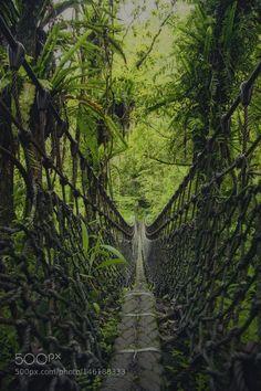 Popular on 500px : Jungle Adventure by HansonMao