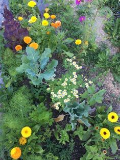 Companion Gardening Interplanting and companion planting in the home garden - Interplanting and underplanting increase yield in small spaces. Interplanting involves growing smaller crops around your larger crops before Organic Gardening, Plants, Interplanting, Cottage Garden, Organic Gardening Tips, Urban Garden, Food Garden, Garden Companion Planting, Organic Pesticide