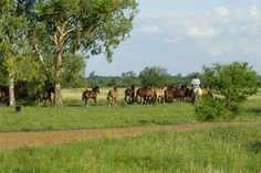 Cabaña El Payé de Caballos Criollos - Provincia de Entre Ríos - Argentina
