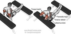 Bench dip. One of the most effective exercises for your triceps. See website for details. Muscles worked: Triceps Brachii, Anterior Deltoid, Pectoralis Major, Pectoralis Minor, Rhomboids, Levator Scapulae, and Latissimus Dorsi.