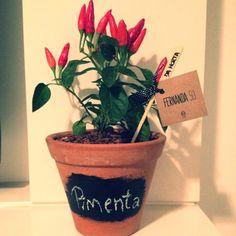 . Vaso de barro P com pimentas e giz Ficus, Mini Vasos, Planter Pots, Home And Garden, Flowers, Container, Gardening, Growing Herbs, Small Garden Design
