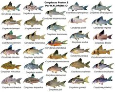 Poster de Peixes
