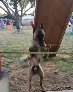 Cute Funny Dogs, Cute Funny Animals, Cute Baby Animals, Funny Cats, Animal Jokes, Funny Animal Memes, Nature Animals, Animals And Pets, Pet Dogs
