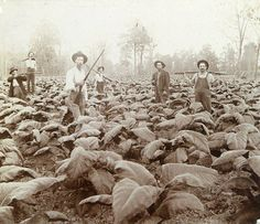 Old eastern Kentucky farmers protecting their tobacco field (and probably moonshine stills)
