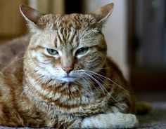 Want To Know More About Cats? Then Check This Out! - http://purebredcatrescue.net/want-to-know-more-about-cats-then-check-this-out/