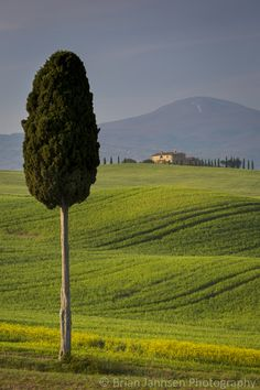 Cypress trees and villa near Pienza, Tuscany, Italy. © Brian Jannsen Photography