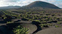 Los alcornocales y viñedos sostenibles, fuente de riqueza y turismo rural | SoyRural.es