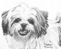 Shih Tzu Drawing Canvas Prints and Shih Tzu Drawing Canvas Art for ...
