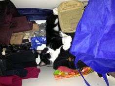 Osku's favorite trick: he opens the wardrobe door, rummages all the stuff out and takes his place at the back corner. Makes a big mess, if you ask me...