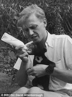 In a young David Attenborough was offered the chance to travel the world collecting animals for London Zoo. Filming his travels for the BBC's Zoo Quest, he went to Guyana, Indonesia and Paraguay, a journey immortalised in Adventures of a Young Naturalist