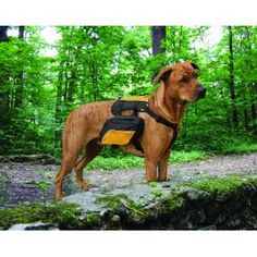 Dog Backpack for an extra dosis of exercise. Check it out at http://www.mybeagletraining.com/store/