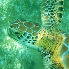 #Underwater mirror Cool Instagram Pictures, Underwater, Mirror, Pets, Animals, Animals And Pets, Animales, Animaux, Mirrors