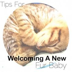 Welcoming Our New Fur Baby: Getting a Home Ready for a New Kitten #‎CatParents‬ ‪#‎Pmedia‬ ‪#‎ad‬