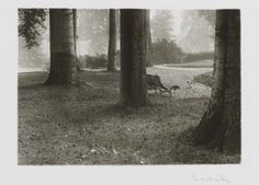 Josef Sudek, A Walk in the Royal Garden,1946✖️More Pins Like This One At FOSTERGINGER @ Pinterest✖️