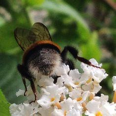 Bij achterkant  Bees backside Hommel #synchroonkijken dag 5