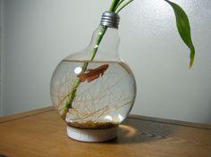 Repurposed large light bulb for Betta Fish. Neat