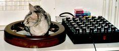 cat on chi generator