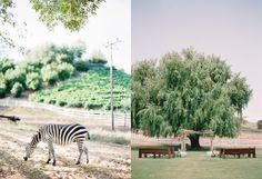 Safari Wedding Inspiration from Utterly Engaged + Propel