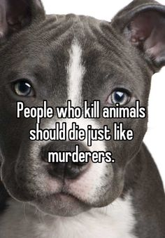 People who kill animals should die just like murderers.