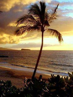 Hawaii Beach House View.