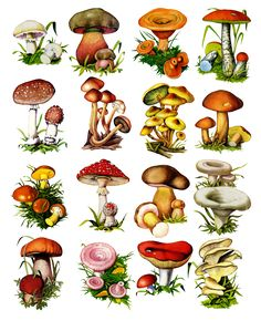 mushrooms for decoupage Mushroom Drawing, Mushroom Art, Mushroom Crafts, Botanical Illustration, Botanical Prints, Rice Paper Decoupage, Mushroom Tattoos, Art Postal, Photo Images