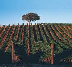 I will grow a vineyard.