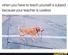 Daily Jokes if you want a lot of funny stuff. Tags: # funny memes can't stop laughing Funny School Memes, School Humor, 9gag Funny, Funny Relatable Memes, Stupid Funny, Funny Posts, Funny Cute, Hilarious Memes, Stupid Jokes
