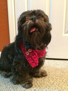 Red Small Dog Scarf with Adjustable Buttons by LunaSavita on Etsy