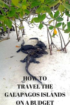 How to travel the Galapagos Islands on a budget: www.jeyjetter.com