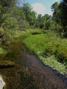 Sonoita Creek, Rio Rico, Az.