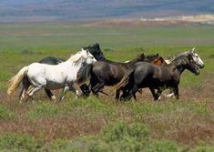 When it comes to wild horses, Tami Fawcetthas a few ideas on what we can do to be both proactive and compassionate.