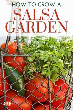Growing a salsa garden, including tomatoes, jalapenos, and cilantro, doesn't have to be difficult. Salsa gardens can be grown in raised beds, row gardens, or even in containers. Gardening For Beginners, Gardening Tips, Flower Gardening, Growing Herbs, Growing Vegetables, When To Plant Garden, Organic Gardening, Vegetable Gardening, Veg Garden