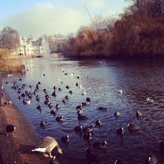 St James' Park, London.
