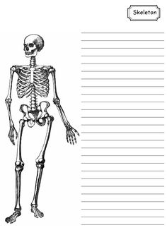 Skeleton Note Paper- students could take notes on these for anatomical art units! Human Body Unit, Human Body Systems, Science Biology, Life Science, Human Skeleton Anatomy, Skeleton Drawings, 3rd Grade Writing, Free Printable Art, Human Anatomy And Physiology