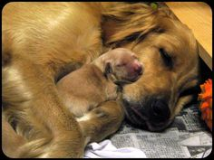 mothers dogs carefully tend to the needs of their tiny, helpless offspring and soon begin teaching them social interactions and proper manners.