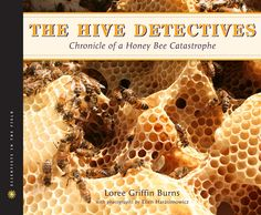 The Hive Detectives: Discusses the strange disappearance of honey bees from hives around the world beginning in 2006, a condition called colony collapse disorder, examines the efforts of scientists to discover the cause of the problem, and includes information about bees, their hives, and their honey.   638 BUR