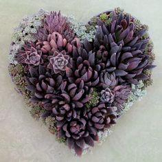 the garden: I Heart Succulents