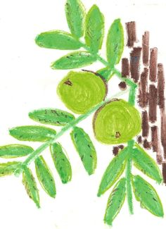 What to Plant Under a Black Walnut Tree | Garden Guides