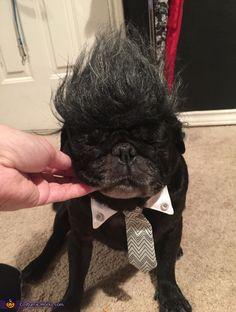 don king ali pugs 2015 halloween costume contest via costume_works - Pugs Halloween