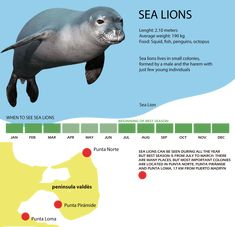 Sea Lions in Patagonia. Elephant Seal, Sea Lions, In Patagonia, Alpha Male, Plan Your Trip, South America, Activities, Travel, Fish